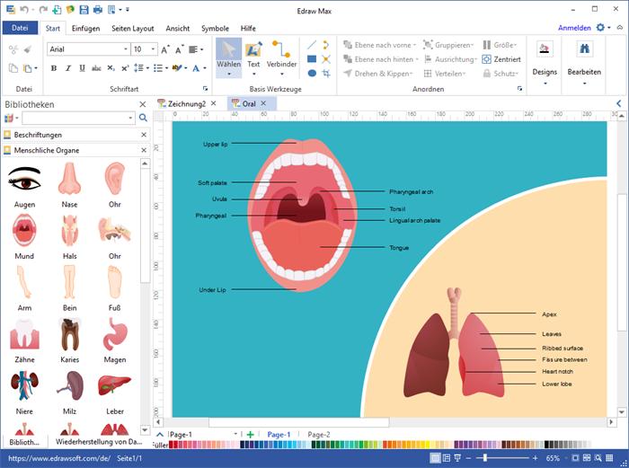 menschliche Organe Diagram Software