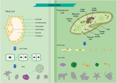Vorlagen der Zelle-Abbildung