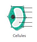 Diagrammes de cellules