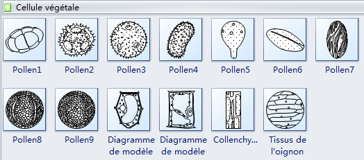 Symboles de cellules de plante