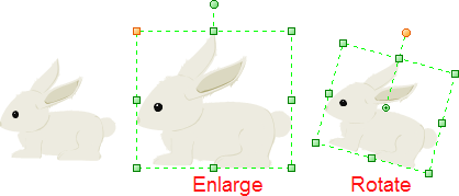 Enlarge and Rotate Animal Clipart