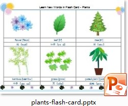 plants Flash Card