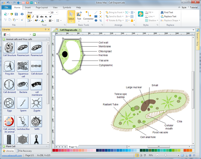 Cells diagrams free download cells diagram software for Drawing program free online