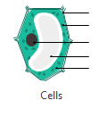 Cells Diagram