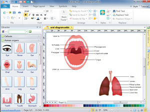 Human Organs Diagram Software
