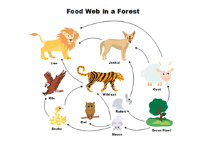 Forest Food Chain