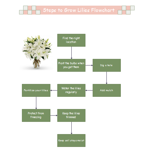 Steps to Grow Lilies Flowchart