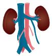 Kidney Symbols