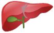 Liver Symbols