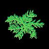 Plante 19