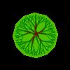 Plante 23