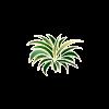 Plante 33
