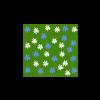 Plante 36