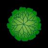 Plante 51