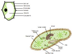 Diagramma delle celle Esempi