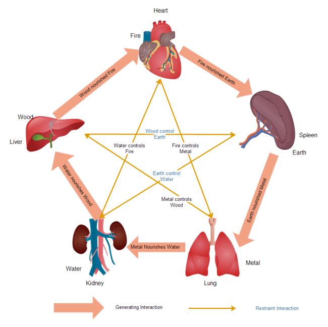 Diagrams About Tcm