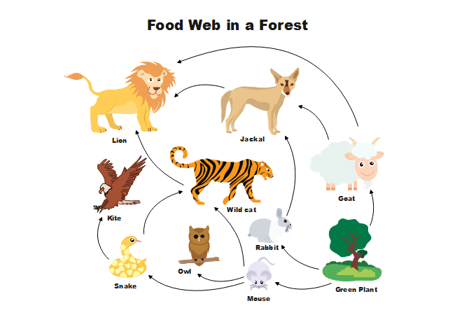 Food Forest Plant List Temperate