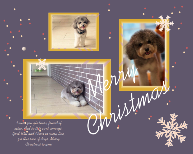 Multiple Photos Christmas Card