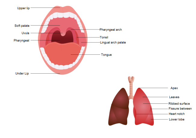 Oral Diagram