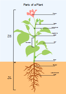 Free Plant Diagram Templates - Start Creating Beautiful ...