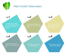 Plant Growth Observation Chart